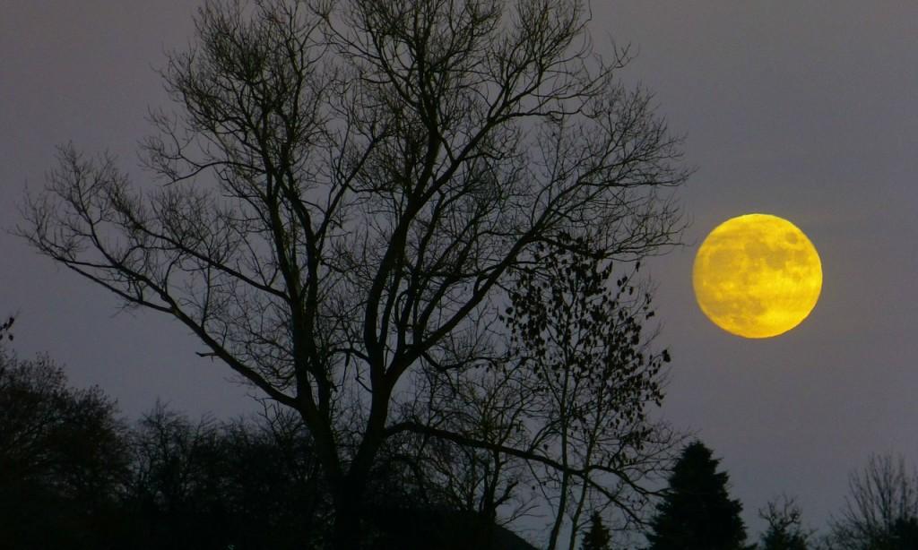 moon-229889_3_5